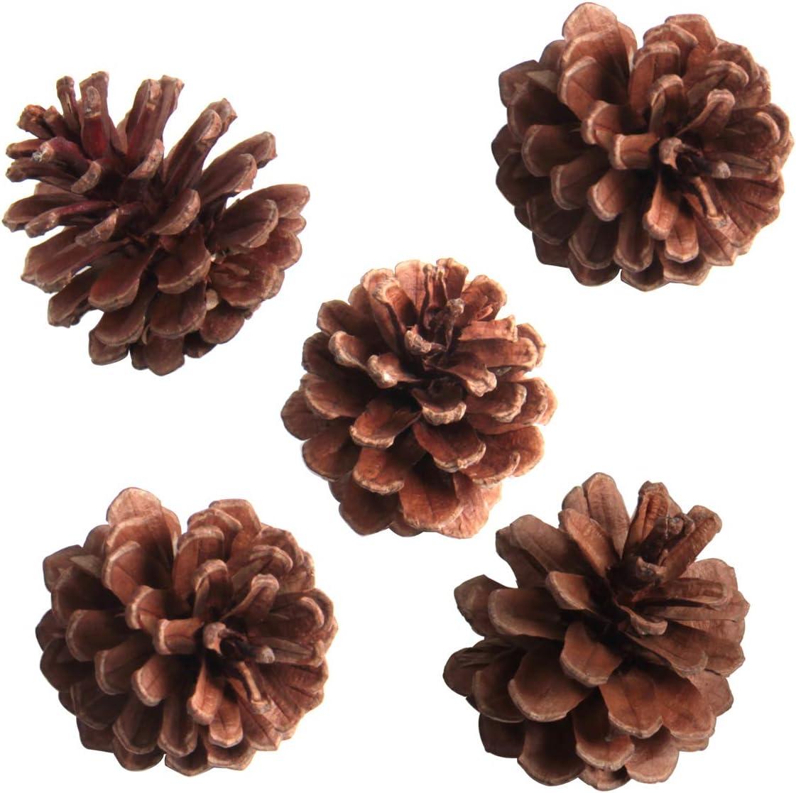 SBYURE 20 Pack Bulk Package of Natural Pinecones for Crafts Home Decor Vase Filler