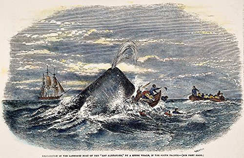 Whaling Boat (Sperm Whale Attack 1851 Ndestruction Of A Rowboat From The Whaling Ship Ann Alexander By A Sperm Whale In The South Pacific Color Engraving American 1847 Poster Print by (24 x 36))