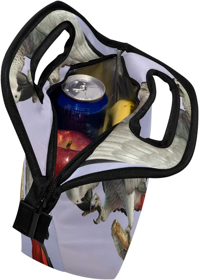 D/éjeuner Sac fourre-tout Congo Gris du Gabon Parrot Cooler Sacs /à main avec fermeture /Éclair pour pique-nique