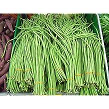 30 YARD LONG BEAN ASPARAGUS BEAN Cowpea Phaseolus Vulgaris Vegetable Seeds *Flat Shipping