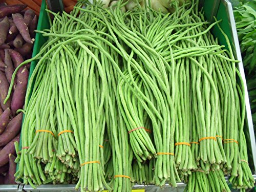 30 YARD LONG BEAN ASPARAGUS BEAN Cowpea Phaseolus Vulgaris Vegetable Seeds (Best Time To Harvest Cowpeas)