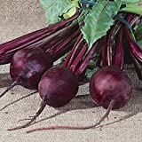 Detroit, Beet Seeds, 1000 Seeds, Medium Top, Dark Red