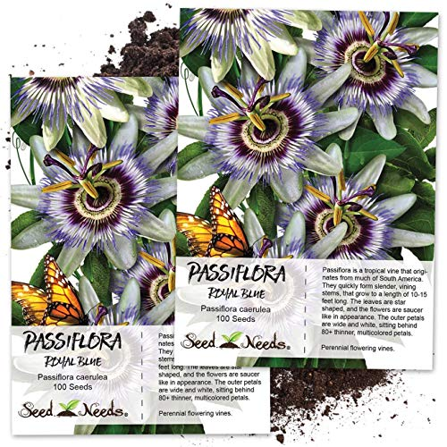 Seed Needs, Blue Passion Flower (Passiflora caerulea) Twin Pack of 100 Seeds Each