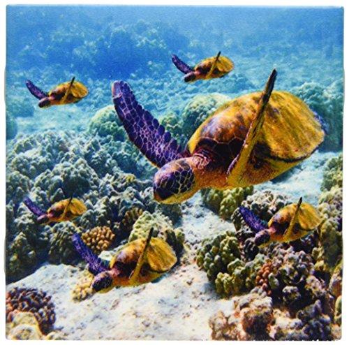 3dRose ct_26850_1 Sea Turtles-Ceramic Tile, 4-Inch