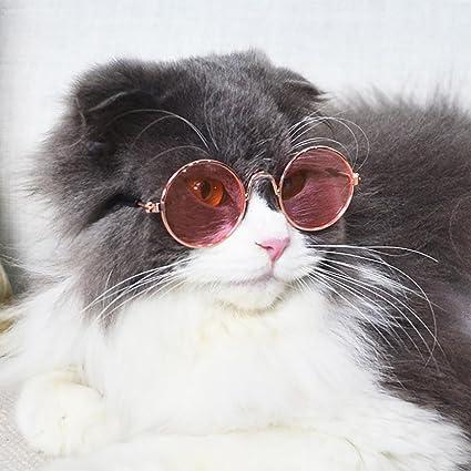 Kolylong - Gafas de sol para gato o gato