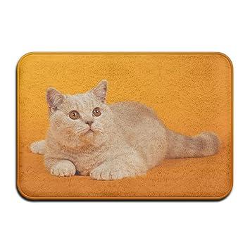 Audieru Entry - Felpudo Antideslizante, diseño de Gato Naranja para Cocina, baño, Mascota: Amazon.es: Hogar