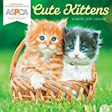 Graphique Cute Kittens ASPCA Wall Calendar - 16-Month 2019 Calendar, 12''x12'' w/ 3 Languages, 4-Month Preview, Marked Holidays, Proceeds from Purchase Go to ASPCA