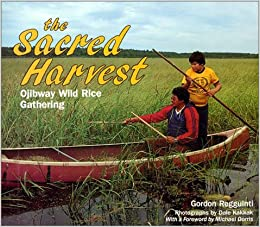 Sacred Harvest: Ojibway Wild Rice Gathering (Native Americans Today)