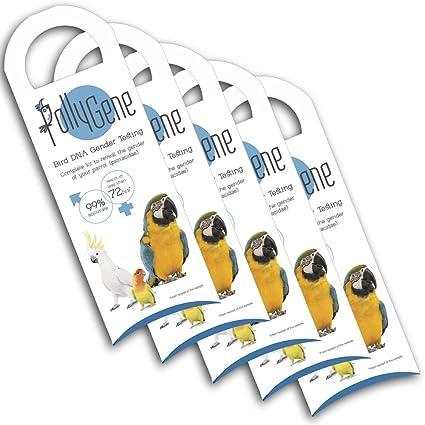 5 Bird DNA Gender Testing Sample Collection Kit  Avian Gender Reveal