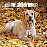 Yellow Labrador Retrievers Dogs Wall Calendar Lab 2017 {jg} Best Holiday Gift Ideas - Great for mom, dad, sister, brother, grandparents, , grandchildren, grandma, gay, lgbtq.