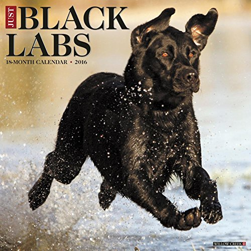 2016 Just Black Labs Labrador Retriever Dog Wall Calendar Willow Creek Press