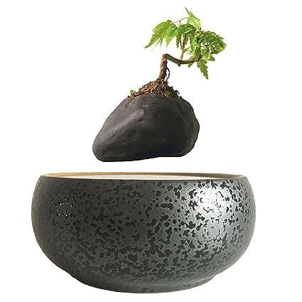 Floating Bonsai Tree Amazon Bonsai Tree