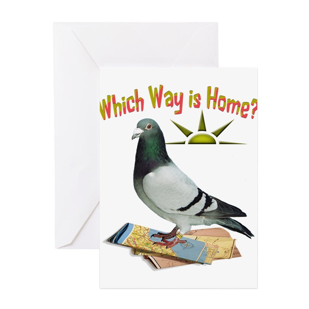 Amazon Cafepress Which Way Is Home Fun Lost Pigeon Art