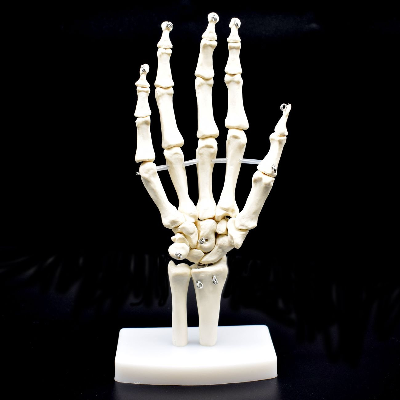 Human Hand Skeleton Model on Base, Hand Bone,Life Size, Articulated shawn science