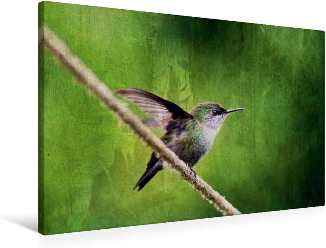 Lienzo de gran calidad, 90 cm x 60 cm, horizontal, diseño de ángel sobre bastidor, imagen sobre lienzo auténtico, impresión sobre lienzo: República Dominicana (CALVENDO);CALVENDO Animales