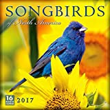 img - for Songbirds of North America 2017 Wall Calendar book / textbook / text book
