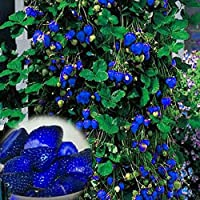 AiCheaX 500Pcs Blue Strawberry Rare Fruit Vegetable Seeds Bonsai Edible Garden Climbing Plant