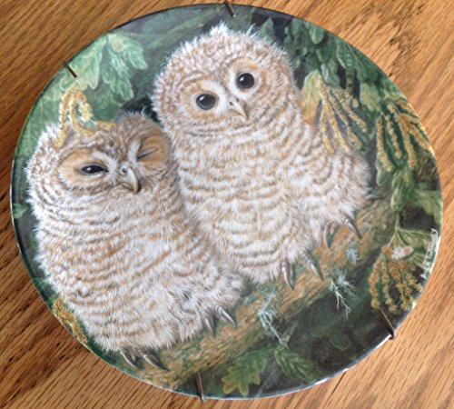 (The Baby Owls Tawny Owl Chicks Twinney Collectors Plate)