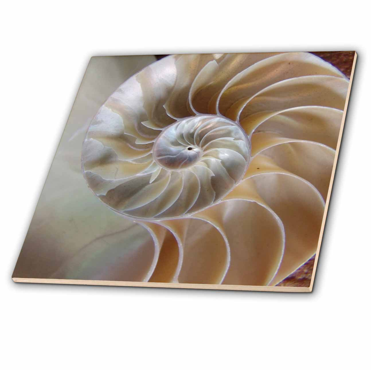 3dRose ct/_7487/_5 Nautilus Shell-Glass Tile 4-Inch