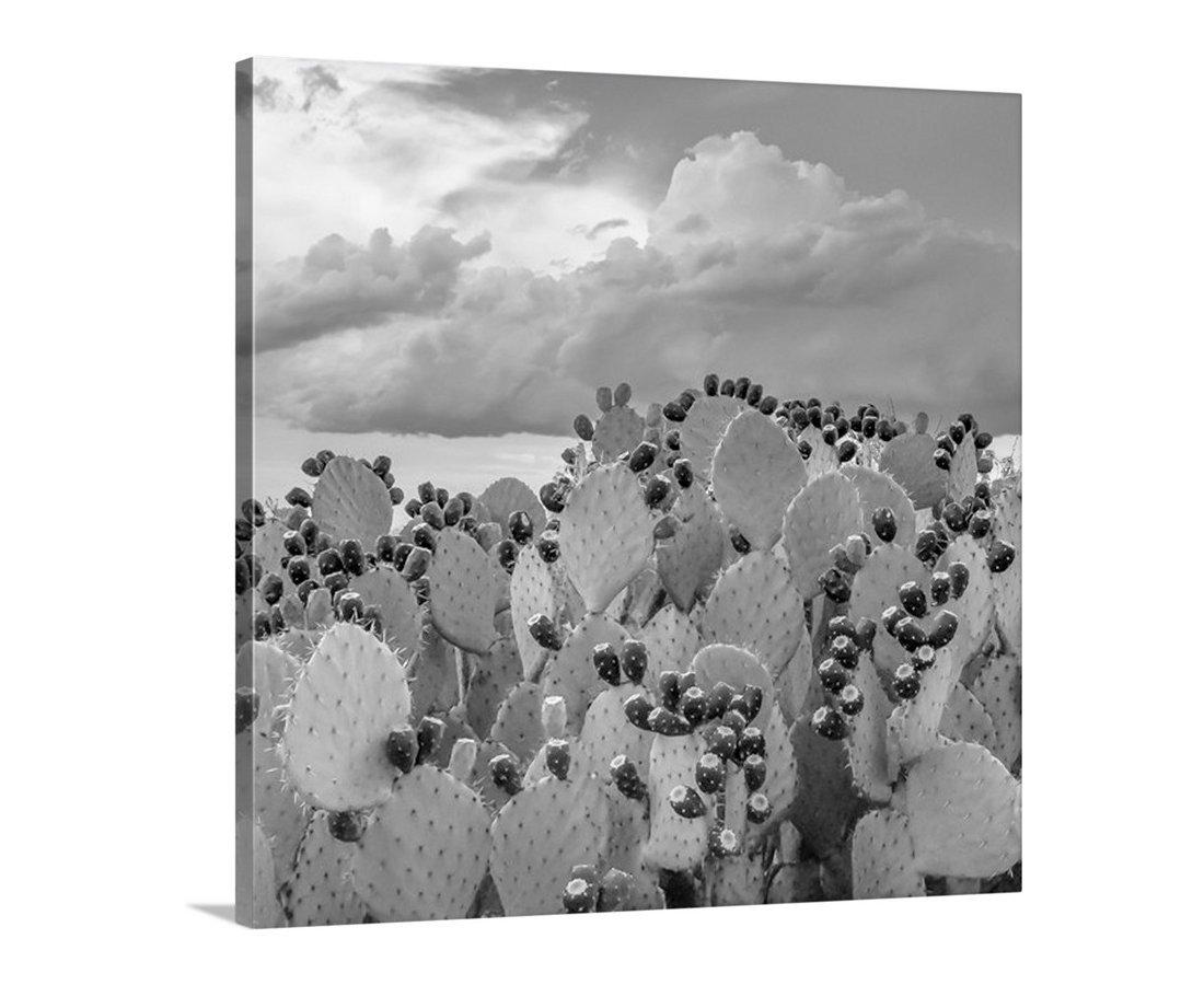 Cactus Art, Black and White Cactus Photograph, Prickly Pear Cactus Picture