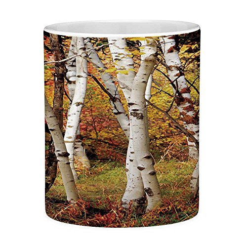 Lead Free Ceramic Coffee Mug Tea Cup White Fall Decor 11 Ounces Funny Coffee Mug White Fall Birch Trees with Autumn Leaves Growth Wilderness Ecology Calm View Decorative Multicolor