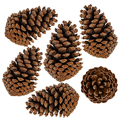 besttoyhome 6 PCS 5- 6 Tall Natural Pinecones Giant Pine Cones Large Pinecone Ornaments Real Preserved Pine Cones Big Pinecones