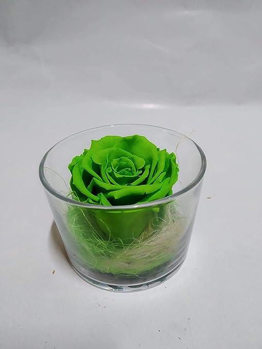 almaflor Rosa eterna Verde Lima. Gratis TU ENVÍO Prime. Rosas ...