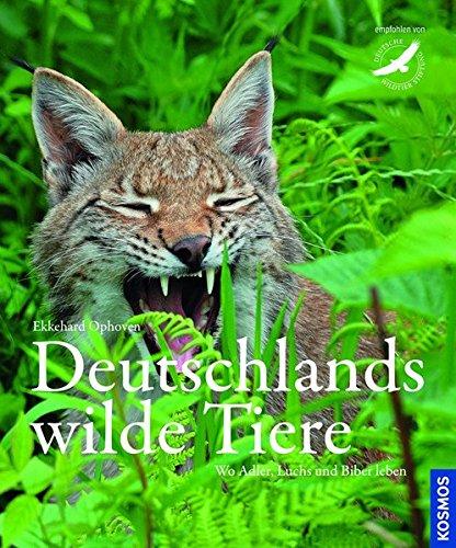 Deutschlands wilde Tiere: Wo Adler, Dachs und Biber leben