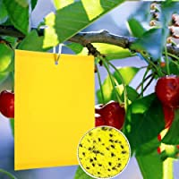 20 Pack Dual-Sided Yellow Sticky Traps for Capturing Flying Plant Insects Like Fungus Gnats, Flying Aphid, Whiteflies…