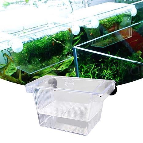 D - Incubadora de pecera de acrílico Transparente para criar Peces, Caja de