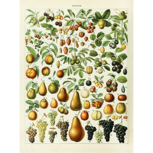 (Meishe Art Vintage Poster Print Fruits Collection Identification Reference Chart Diagram Kitchen Dining Room Restaurant Wall Decor Pear Peach Grape)