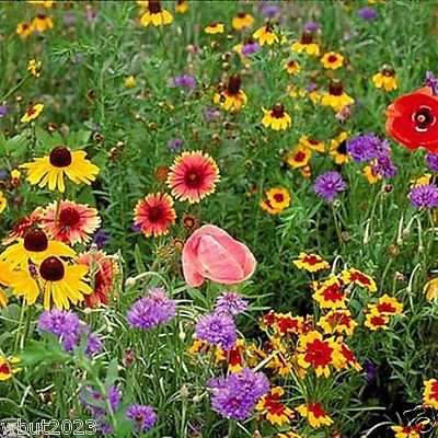 Midwest Wildflower Mix ( 1 Oz Seeds) Covers Approx 225 Sq Ft5 - (Midwest Wildflower)