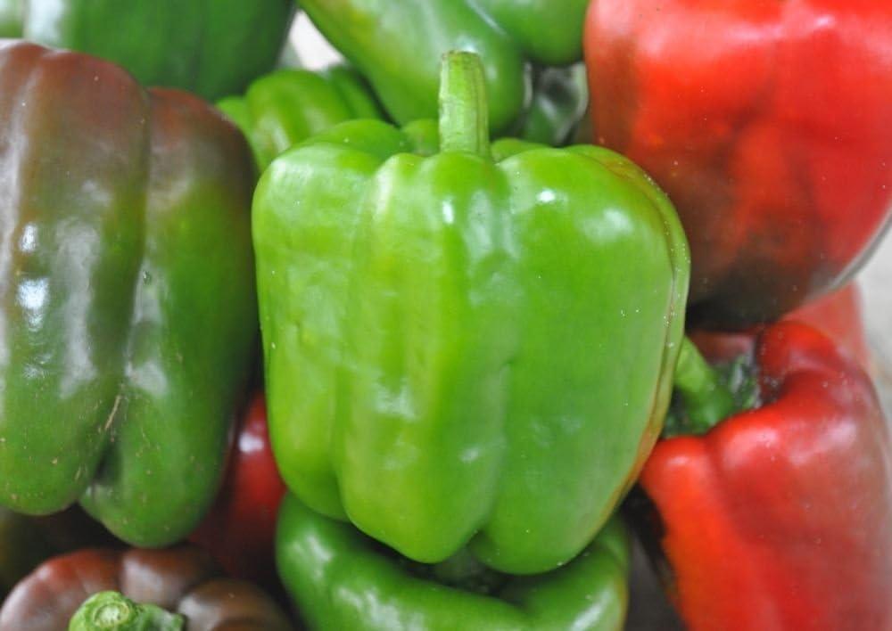 Golden California Wonder Bell Sweet Pepper Seeds FREE SHIP Heirloom NON-GMO