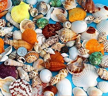 Amazon De 90 Formen Dekoration Aquarium Dekorieren Accessoires