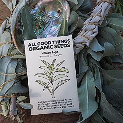 All Good Things Organic Seeds White Sage Seeds (~50): Non-GMO, Certified Organic Heirloom Seed Packet