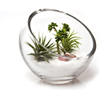 "Chive - Round, 6"" Handmade Clear Slant Cut Bowl Glass Vase / Glass Terrarium / Candy Jar - Use for Succulents, Cacti…"