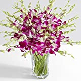 #8: ProFlowers - 30 Count Purple Deluxe Purple Dendrobium Orchids w/Free Clear Vase - Flowers