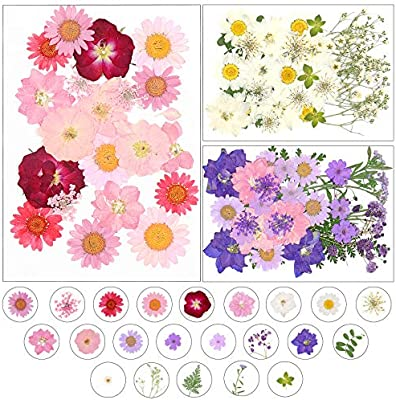 Bonarty 20Pcs Pressed Forget Me Not Organic Dried Flowers DIY Art Craft Floral Decor