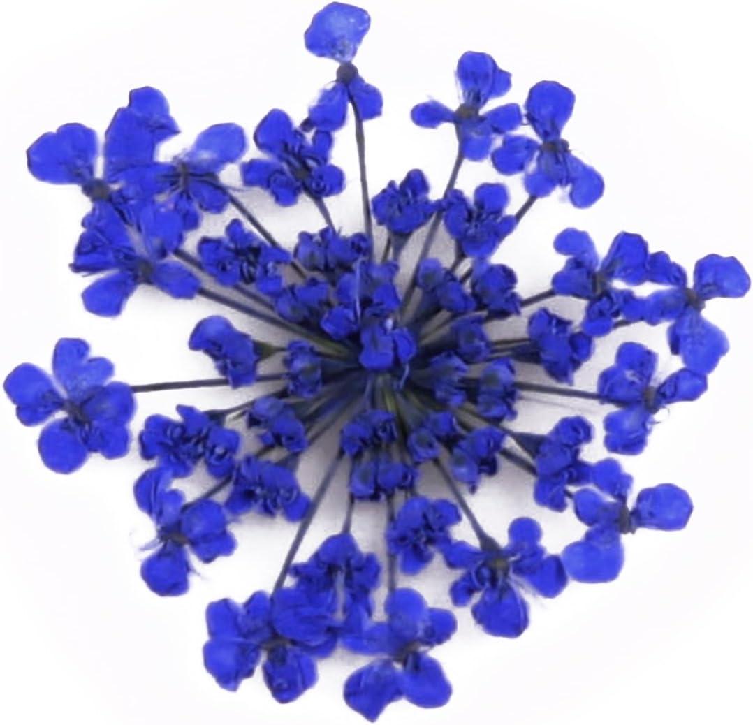Handwerk Gepresste Blumen Scrapbooking Kartenherstellung blaue Spitze Blume 20 St/ücke f/ür Kunst
