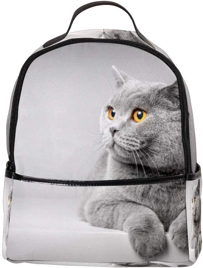 Lightweight MAPOLO Laptop Backpack British Shorthair Cat Lying On The Table Casual Shoulder Daypack for Student School Bag Handbag