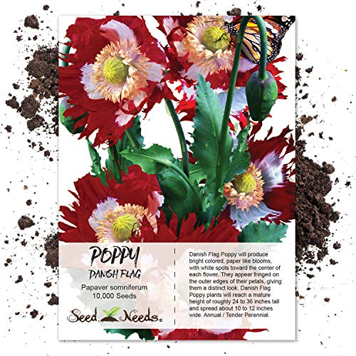 Chillhawaiian Brand Tasmanian Purple Papaver Somniferum Poppy Seeds
