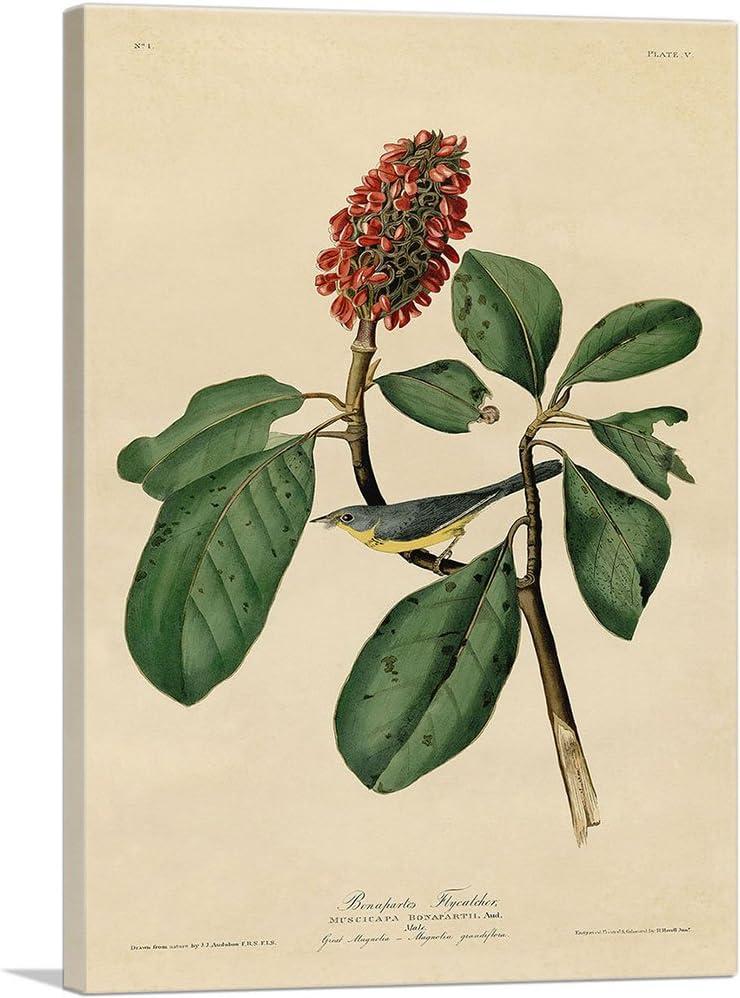 John James Audubon Children/'s Warbler,The Birds of America,canvas print,canvas art,canvas wall art,large wall art,framed wall art,p2329