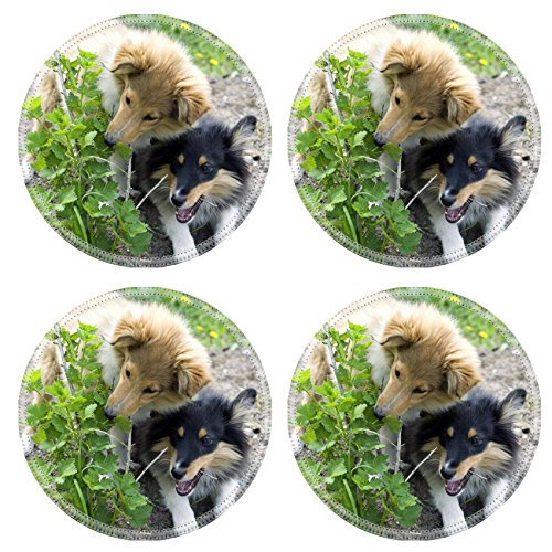 MS Depot MSD Round Coasters IMAGE ID 19934597 sheltie pup...