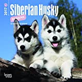 Siberian Husky Puppies 2017 Mini 7x7