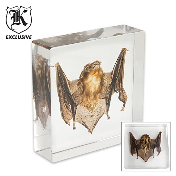 Amazon.com : Real Bat Paperweight Clear Lucite : Skeleton In Lucite ...