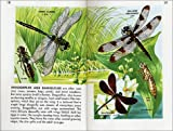 Golden Guide 160 Pages Paperback Insects Book