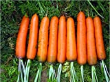 Vegetable seeds carrot seed sweet four seasons 50 PCS / bag Original packaging Home Garden