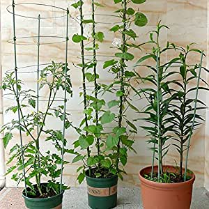 Jaula de tomate y planta apoyo con 45cm de alto de metal con recubrimiento de plástico estacas y 3anillos