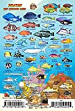 "Roatan Bay Islands Honduras Reef Creatures Guide Franko Maps Laminated Fish Card 4"" x 6"""