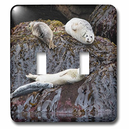 3dRose Danita Delimont - Seals - Harbor Seals Resting at low tide - Light Switch Covers - double toggle switch - National At Harbor Outlets